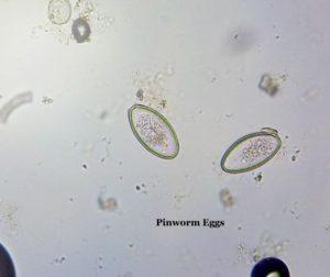 Equine Parasite Control | Pedernales Veterinary Center